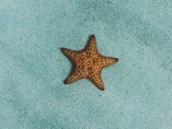 starfish story overwhelm